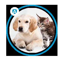 alergeny zwierząt domowych - active
