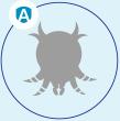 house dust mites