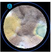 fungal spores allergens