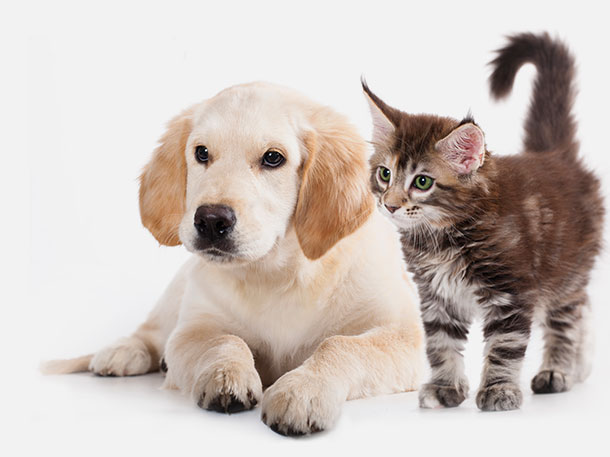 Dog and cat - image
